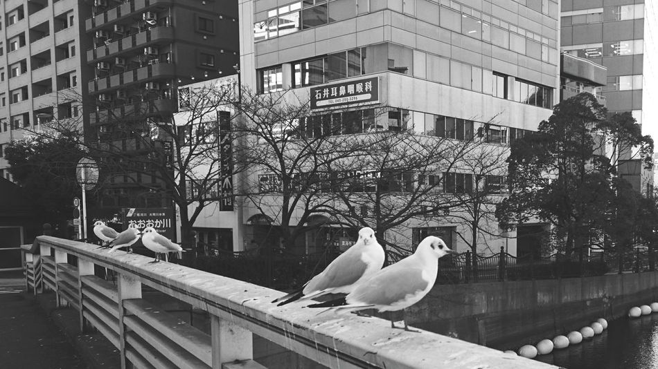 Japan Yokohama Days  Holiday Smartphonephotography AndroidPhotography Walking Around Bird Photography Bird