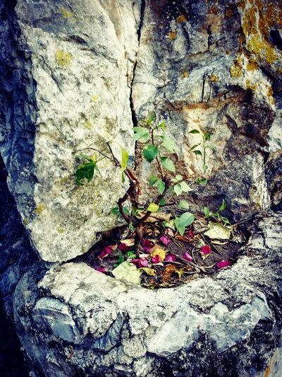 Tree Of Life. Naturelover Naturaleza Hello World Enjoying Life Relaxing Tree Art Arbol De La Vida Green Rocks Filters