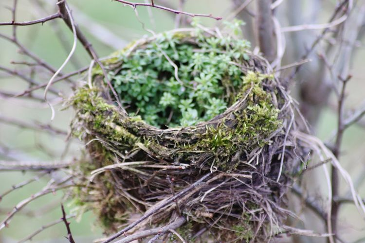Close-up of plant in nest
