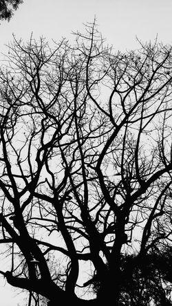 break Treelover  Treesofinstagram Treeshunter Oldtree Treetops Treespleasure Blackandwhite Trees Toptags Treelove Treestagram Tree_perfection Bird Backgrounds Tree Branch Silhouette Sky In Bloom Bird Of Prey Sky Only Leaf Vein Growing Cockatoo Flock Of Birds Blooming Vulture Plant Life Botany Eagle - Bird Falcon - Bird Pollen Bald Eagle Hawk - Bird