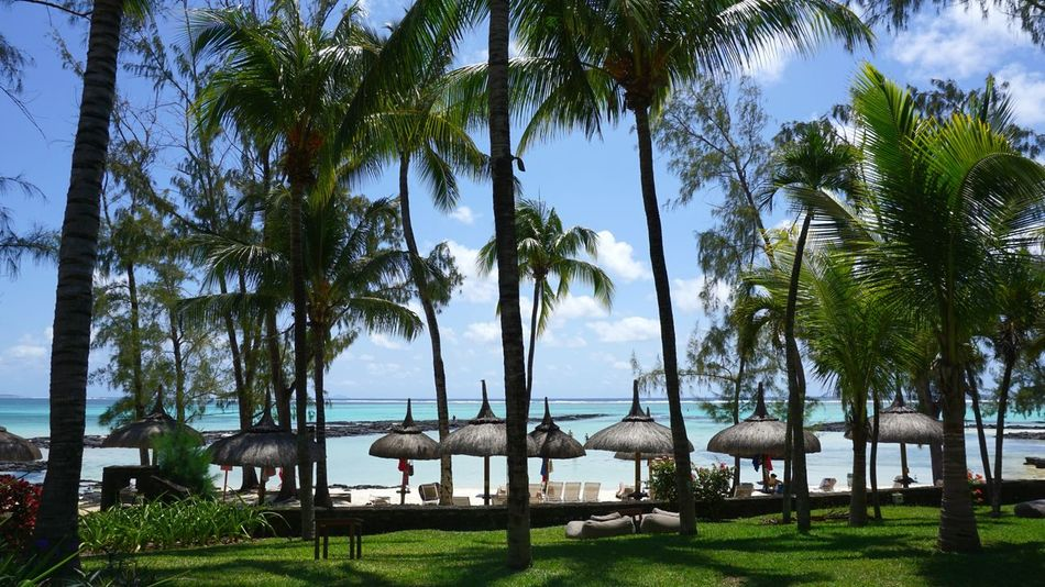 île Maurice  Mauritius Ocean View île Maurice  Summer Mauritius Island  Travel Destinations Ambre Hotel Shore Blue Sand Seascape Tourism Idyllic Tropical Tree Water