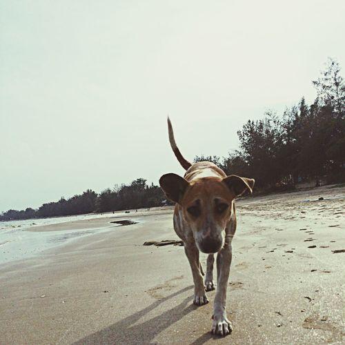 u r never walk alone Beach Dog Sea