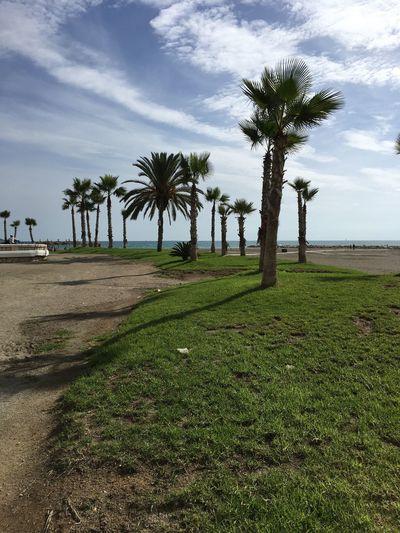 Palm Tree Nature Málaga,España spain Day beach Enjoyyourdayoff
