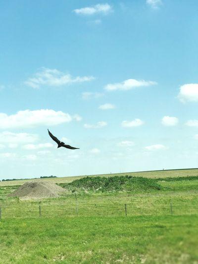 Flying Animal
