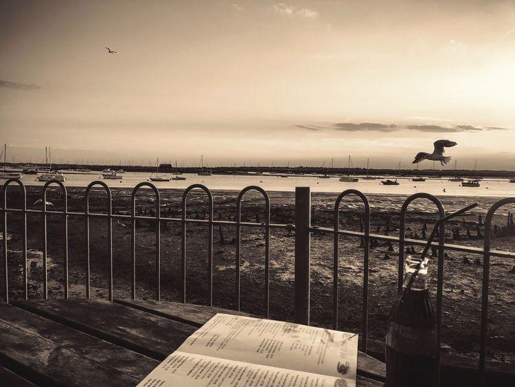 The Week On EyeEm Sepia Table Restaurant Bird Water Relaxing Memories
