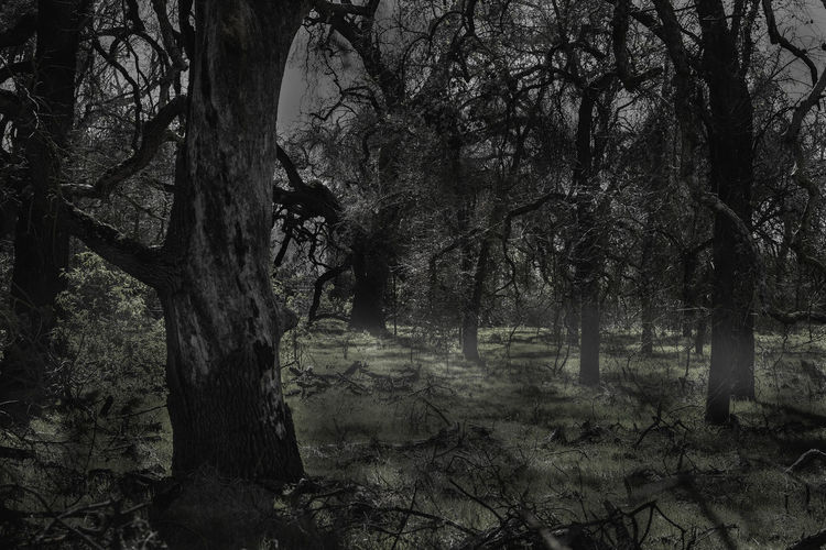 All Hallows Eve Darkness Fall Beauty Halloween Halloween EyeEm Halloween Season Halloween_Collection October Spooky Atmosphere Spooky Trees Spooky Things SpookyHalloween Trees Spooky Spooky Forrest Spooky Photo Spooky Places Spooky Tree Trees And Nature Treescollection