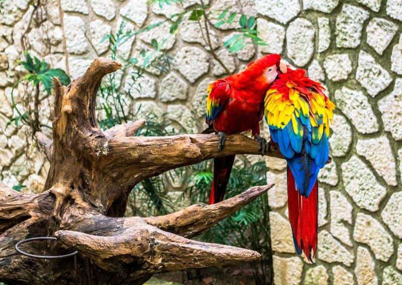 Bright Parrots Kissing Attraction In Mexico Authentic Mexican Food Bright Parrots Friendlylocalguides Holidays Kissing Mexico National Landmark Park Pyramid Things To Do Vacation What To See In Mexico Where To Go Xcaret