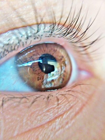 Human Eye Eyelash Eyesight Human Body Part Iris - Eye Eyeball One Person Sensory Perception Macro Looking At Camera Close-up Full Frame Eyelid People Adult Adults Only Eyebrow Real People Portrait One Woman Only