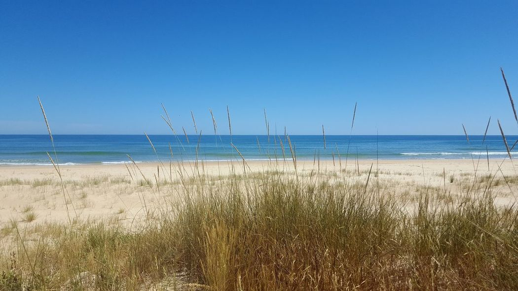 The Great Outdoors - 2017 EyeEm Awards Sea Water Beach Horizon Over Water Sky Nature Sand Scenics Outdoors Blue Beauty In Nature Day Tranquil Scene No People Tranquility Flying Bird Clear Sky Marram Grass Animal Themes CacelaVelha Cacela Velha Portugal Algarve Portugal Sommergefühle