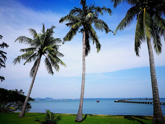 Sea View Relaxing The Sea Tree Water Beach Sea Outdoors Growth Nature Landscape Beauty In Nature EyeEmNewHere