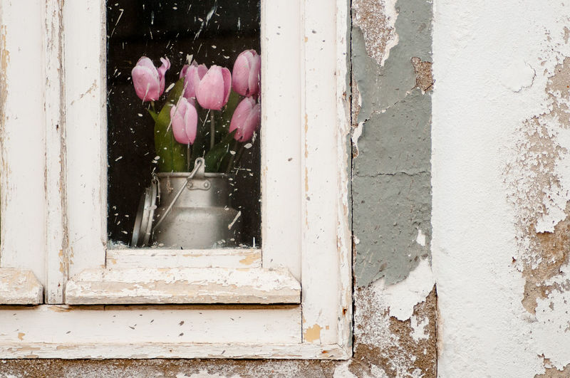 pink tulips inside a house Close-up Day Flower Growth Nature No People Outdoors Plant Window