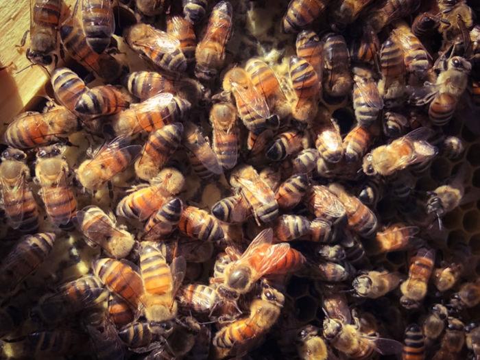 Full frame shot of bee