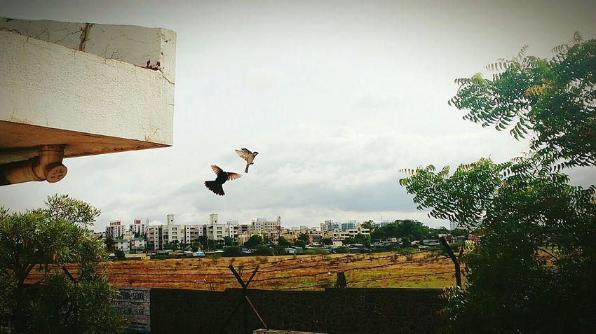 Bird Photography Birds In Flight Birds In Motion Naturelover