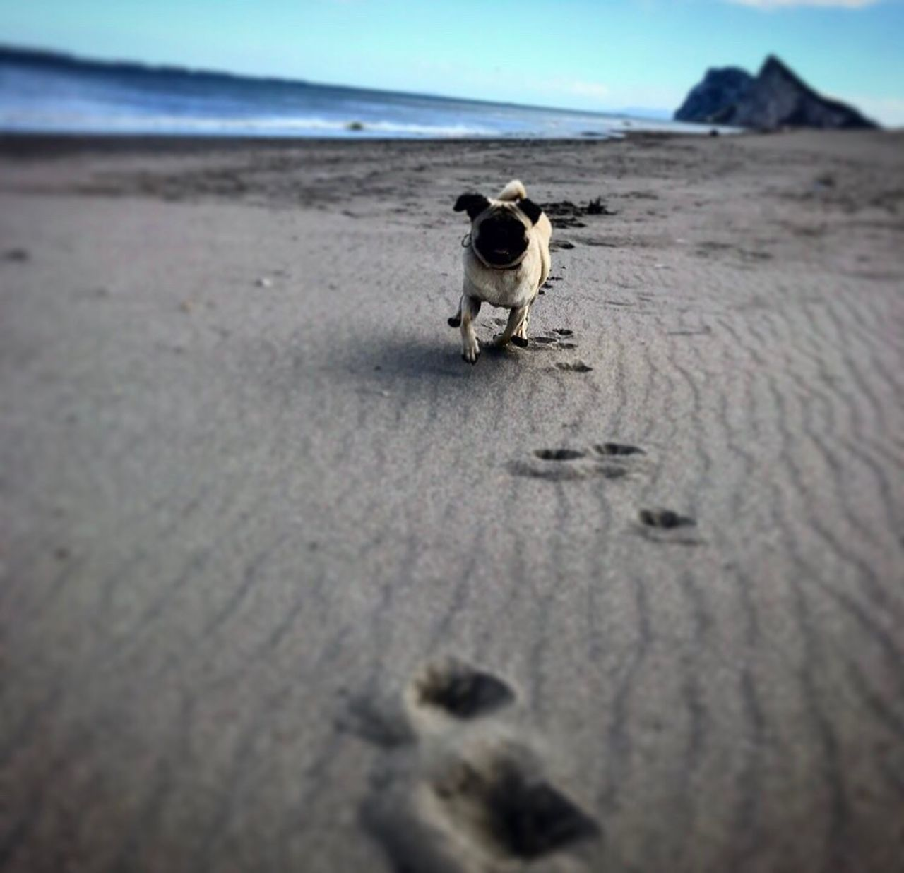 sand, beach, one animal, animal themes, dog, pets, domestic animals, sea, outdoors, day, paw print, nature, no people, mammal, full length, sky, water