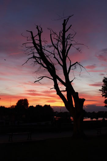 #Hammersmith #london #Thames Path #thamesriver Beautiful Nature Beauty In Nature Dramatic Sky Nature No People Outdoors Relaxing Romantic Sky Silhouette Sunset Tree