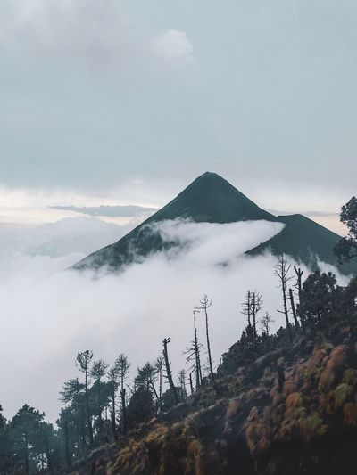Morning fog Sky Tree Mountain Plant Scenics - Nature No People Cloud - Sky Nature Beauty In Nature Non-urban Scene Environment Tranquil Scene Land Mountain Range Tranquility Day Outdoors Travel Destinations Mountain Peak