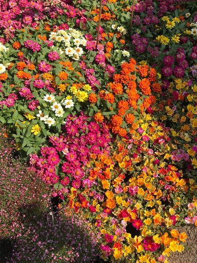 Full frame shot of flowering plants