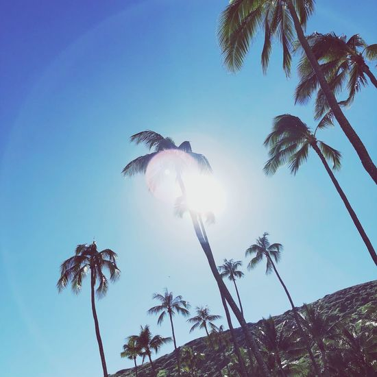 Summertime Summer Vacation Summer Views Summer Vibes Sunlight Warm Hot Day Sunbathing Sun Fun Enjoying The View Enjoying Life Enjoying The Sun Hawaii Life Hawaii Summer Vacation Time Vacation Palm Tree Low Angle View Nature Tree No People Outdoors Growth Day Clear Sky Sky Beauty In Nature