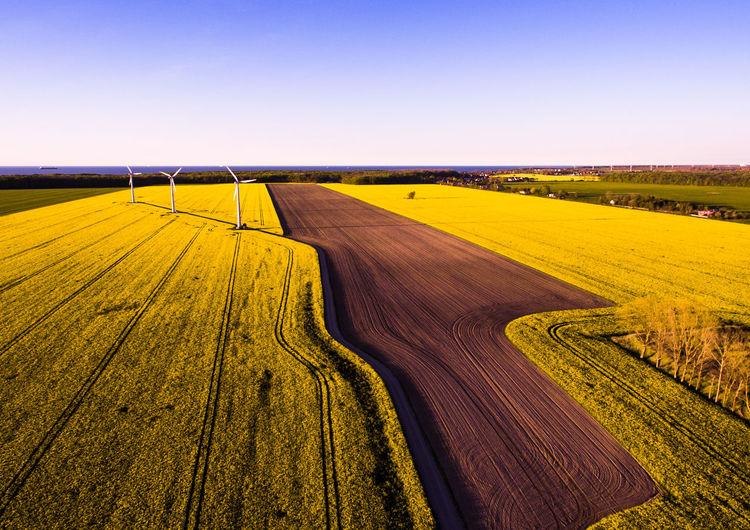 Rapeseed Rapeseed Field Landscape Environment Sky Rural Scene Land Field Farm Scenics - Nature Yellow Nature Plant Clear Sky Beauty In Nature High Angle View EyeEmNewHere