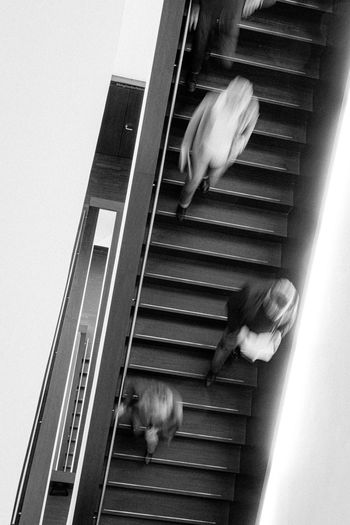 Blurred motion of dog on staircase