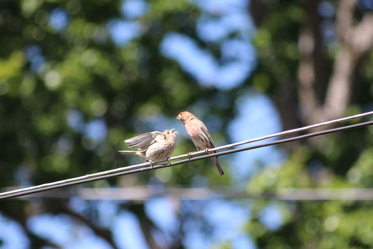 Low angle view of bird perching on cable against blurred background