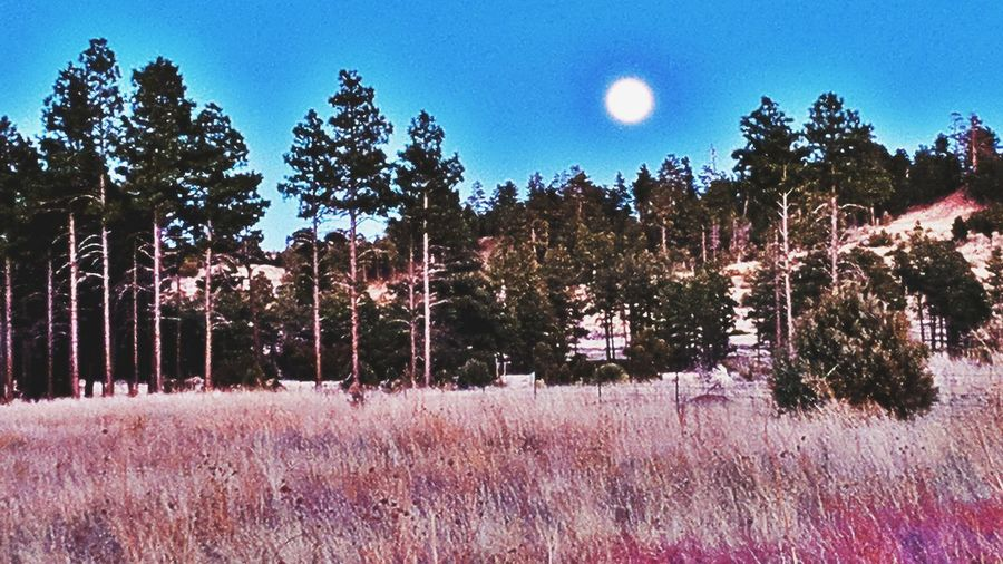 full moon rise Heber Arizona Full Moon Rise