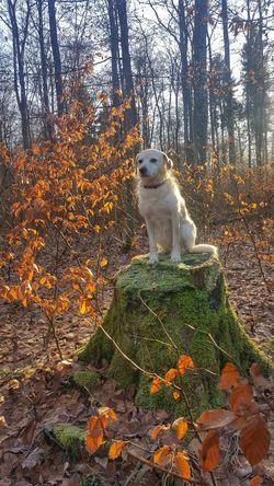 my Lea Winter Schönes Wetter Deutschland Tree One Animal Day Animal Themes Outdoors Nature No People