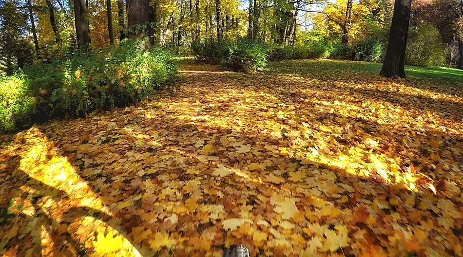 Tree Nature Autumn Goprophotography Gopro Shots Gopro Goprohero4silver Goprohero4 Relaxation Poland Is Beautiful Relaxing Capture The Moment Park żywiecki Žywiec