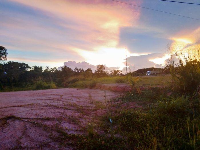 วิวข้างทาง Tree Sunset Flower Multi Colored Purple Sky Grass Cloud - Sky