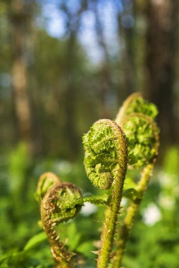 Close-up of fern