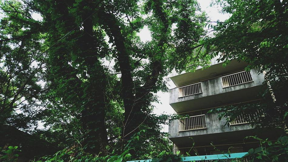 Apart 廃墟 Remains 夏 Summer 木 Green アパート 日本 Japan