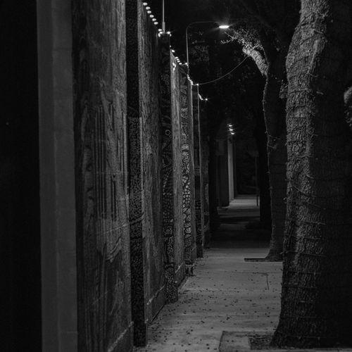 the separation Tree Wall Light Graffiti Art Art Blackandwhite PentaxK70 Minolta50mmf2 Streetphotography Nightphotography Illuminated Hanging Light Lit Urban Scene Blurred Arched Tree Trunk Branch