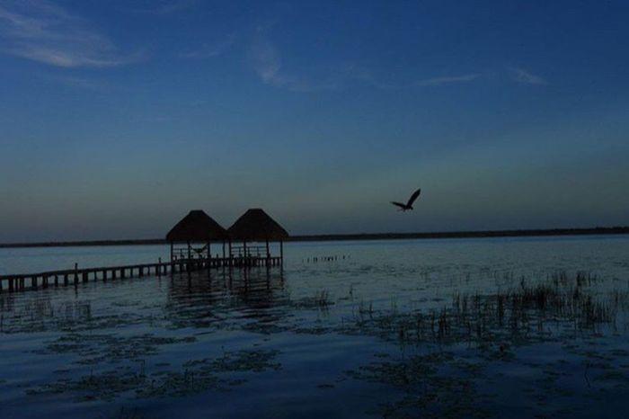 Mexico Hawk Lake Bacalar