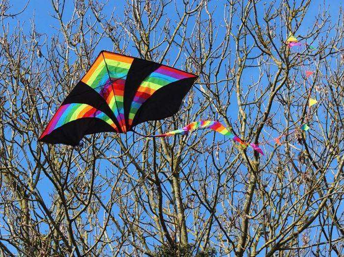 Kite Multi Colored Low Angle View Sky Tree Nature Day Branch