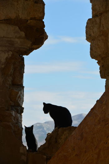 Animal Themes Beauty In Nature Day Domestic Animals Mammal Nature No People Outdoors Pets Rock - Object Rock Formation Sitting Sky Two Cats Dubrovnik, Croatia