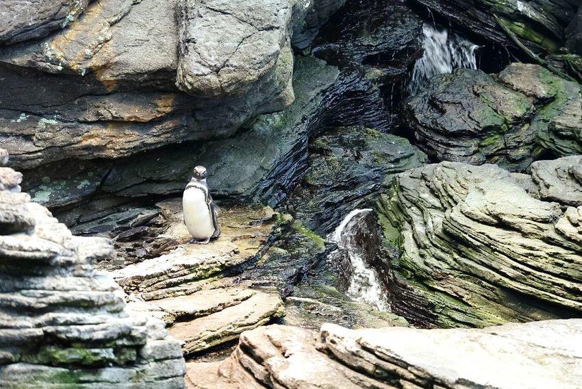 Penguin Textures Wildlife