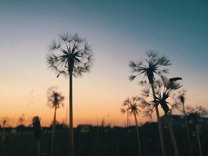 Silhouette Of Palm Trees On Field Against Sky During Sunset