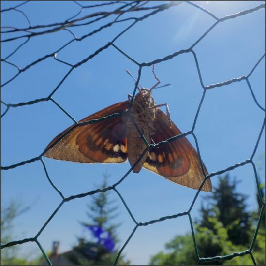 Beauty In Nature Butterfly Butterfly - Insect Nature Papillon Sky
