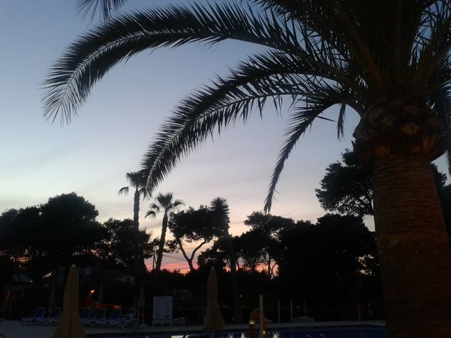 Sunset Silhouettes Day Growth Nature No People Outdoors Palm Tree Silhouette Sky Tree Menorca _ Spain Cala Blanca