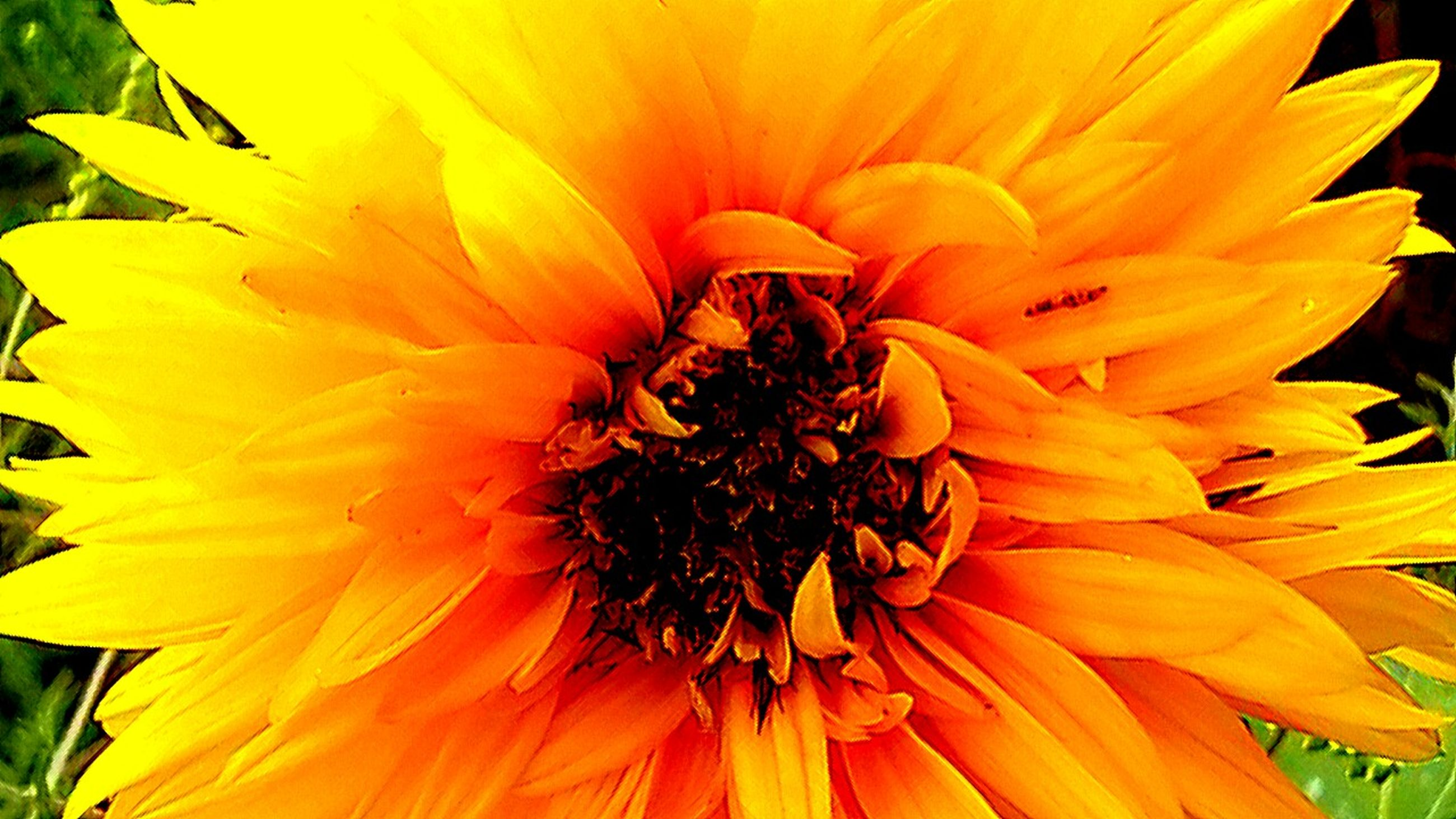 flower, petal, flower head, freshness, fragility, pollen, yellow, beauty in nature, single flower, growth, close-up, blooming, nature, stamen, sunflower, plant, in bloom, orange color, focus on foreground, no people