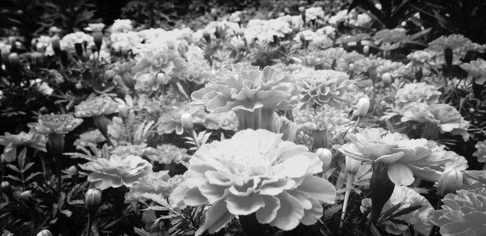 Flowers IPhoneography Frame It! Justgoshot