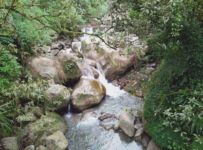 吸收滿滿芬多精 Outdoors Water Beauty In Nature Nature Green Color EyeEmNewHere