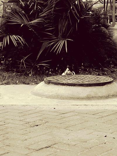 اثناء ذهابي للعمل لفت انتباهي هذا القط المختبئ و كأنه يراقب أمر مريب Plant First Eyeem Photo