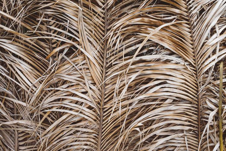 Palm Trees Dry Sun Calmness Beach Life Pattern Dried Dried Plant Palm Palm Leaf