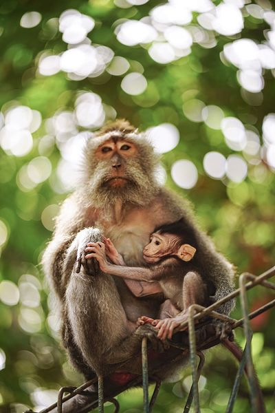 Eyeem Philippines Monkey Care Mammal Tree Nature Animal Family Animal Animal Wildlife Primate Beauty In Nature Baby Branch Body Care Tail Outdoors Close-up Day Bali, Indonesia Mother & Child EyeEmNewHere Live For The Story Investing In Quality Of Life Pet Portraits Rethink Things This Is Family