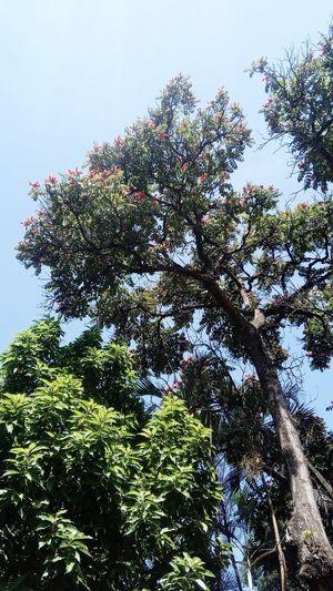 árvore natureza