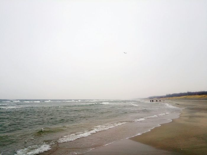 Baltic Sea Beach Water Nature Outdoors Bird No People Beauty In Nature Sea Sky Silence Moment Day Winter Walking