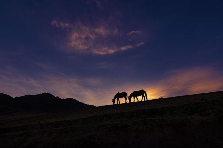 Silhouette of horse on landscape against sunset sky