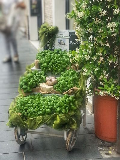Growth Plant Green Color Vegetable Day Outdoors Freshness No People Nature Close-up Building Exterior Architecture Food City Greenhouse Basilicum Pesto Genovese Sauce Pesto Alla Genovese Mortar And Pestle Note 2 Smartphone Photography
