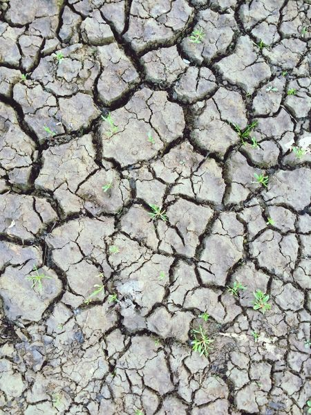 Ground Dry Viscom